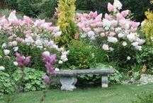 Des jardins et des fleurs