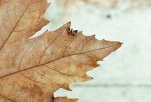 ~ Autumn.. the year's last Loveliest Smile ~