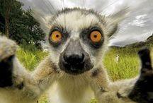 Animal Selfies / as the name says...