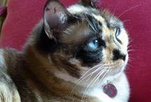 Feline eyes / Bellos, curiosos y enigmáticos ojos y miradas de todo tipo y razas de gatos / by Nieves Baeza