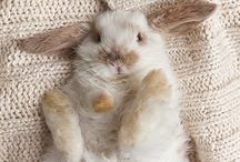 Fluffy Bunnies / I really love bunnies!