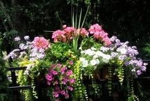 Gardening / by Jackie Hughes