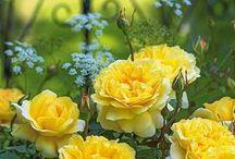 Ogrody,inspiracje / inspiracje i zdjęcia mojego ogrodu