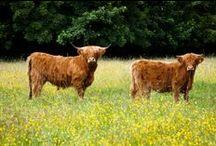 Errol Park Wildlife / Natural life and grounds around Errol Park