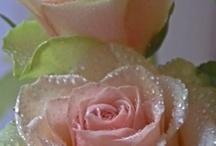 Flowers / by Cynthia Roland