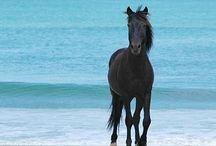 Paarden en pony's