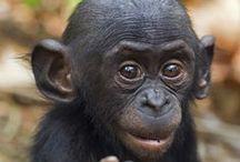 Bonobo / by Miklos Barath