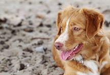 Doggie / Saar!