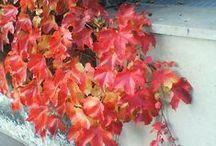 Wasze zdjęcia - jesień / Najpiękniejsze kolory jesieni według czytelników :) www.weranda.pl