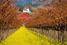 Napa Valley / This beautiful corner of the world.