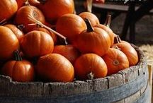 Fall Favorites / We love fall in Napa Valley--changing leaves, savory dishes, rich wines, and of course, harvest!