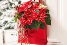 Boże Narodzenie: dekoracje / #święta #bozenarodzenie #whitechristmas #christmas #dekoracje #święta #dekoracjeDIY #inspiracje #bombki #gwiazdabetlejemska #inspirations #christmas #christmasdecorations #DIY #DIYdecorationIdeas
