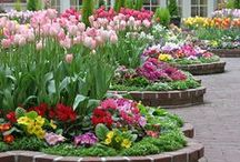 Garden Inspiration / by A K