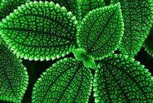 grün ja grün sind alle....