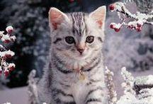CATS / KATT