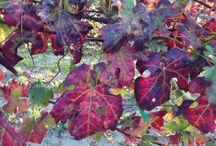 Colori d' autunno... / Paesaggi selvaggi in provincia di Alessandria Piemonte. Italian