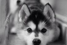 cute n_n