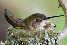 BIRDS & BUTTERFLIES / by Zina Lawler