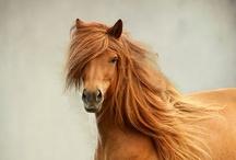 HORSES / by Zina Lawler