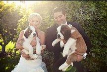 Furry Friends / We love when pets make appearances!