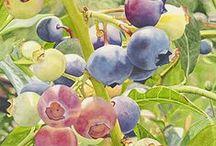 плоды( акварель)