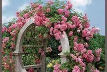 Flowers - Garden