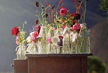 | Glass | / ~flowers ~bottles ~jars ~light bulbs ~fairy lights ~creations ~beauty