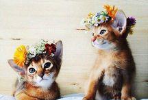| Floral and Succulents | / ~flowers ~animals ~crowns ~arrangement ~edible ~boho ~bohemian ~beautiful ~colour ~succulents
