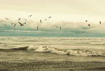 | Ocean Days | / ~beach life ~vintage ocean love ~colours ~seaside ~lifestyle ~outdoors ~beauty ~surf culture ~salt and sand