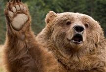 Must love bears!