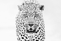 The Wild / by Hunter Thomas