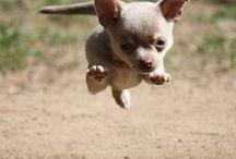 Wait!!! So...I run :D