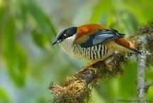 Birds of India / The birds you can see in Indian continent.(if you are lucky enough)