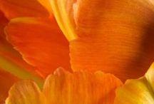 Orange-world