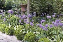 JARDIN : PLANTATIONS