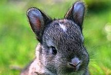 Cute Animals! / This board consists of cute animal pictures that I took or, more likely, found on the internet!