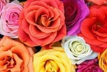 Flowers / by pinkredandviolet