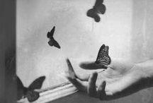 ♥ Butterflies ♥