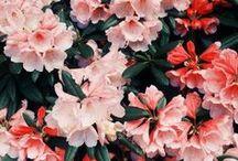 Blooms / We love flowers :)