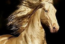 Horse About / majestic beautiful creatures hard to believe they are real and not from some fantasy world