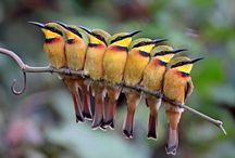 Flock Together / Birds birds birds beautiful birds!