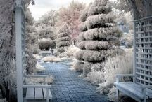 Gardening in the Winter / Winter Inspiration for your Garden as well as tips and trick and DIY projects you should try.