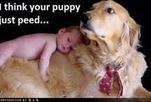 """""""Fur babies"""" / Life's not complete without a dog in it!"""