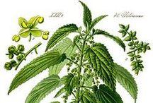 phytothérapie / plantes et bienfaits
