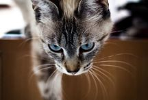 Feline ❤️ / Chat•Kat•Qit•Katze•Gatto•Neko•Koshka / by Stephanie Vega