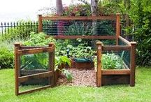 Garden ideas / Tricks and hacks for your garden, big or small.