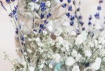 Wedding : THE IDEAS