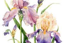 Kwiaty pędzlem malowane