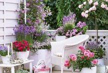 Garden on the balcony and terrace