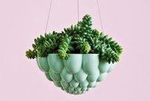 full: garden / by Emily Watson